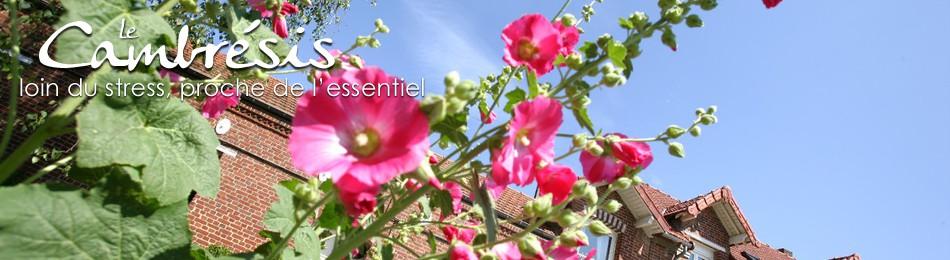 Roses Trémières, Chambre d'hôtes de Ribécourt la T