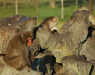 Parc animalier d'estourmel