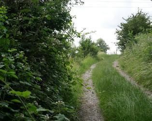 Chemin menant vers le Grès de Monfort ou Gros Cail