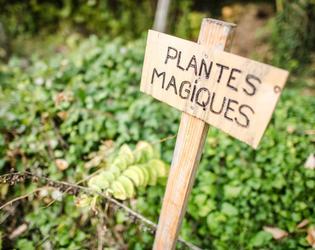 plantes aromatiques 3 - archeo'site - Francois Mor