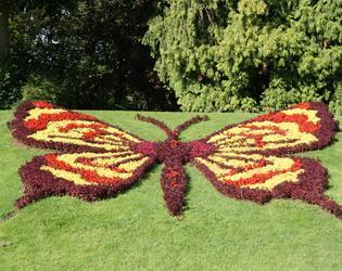 16. Le papillon cVilledeCambrai