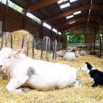 Visite au salon de l'agriculture