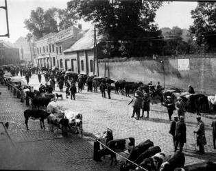 Marché aux bestiaux rue de Fesmy