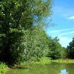 le Bois Chenu, Proville