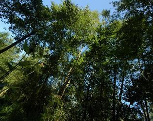 le Bois Chenu