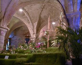 Orchidées, Abbaye de Vaucelles