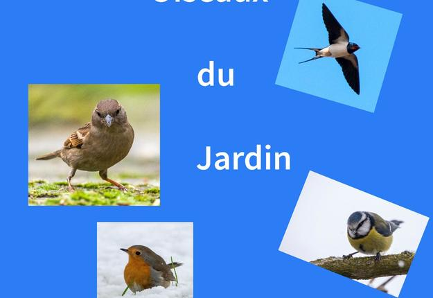 conference oiseaux caudry 2019