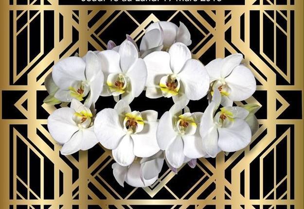 orchidees en folie